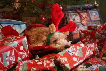 adorable-animal-beautiful-beauty-christmas-Favim.com-248306