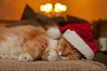 adorable-animal-beautiful-cat-Favim.com-1484603