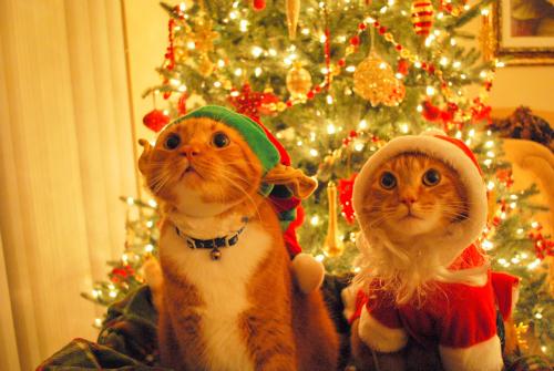 animal-animals-cake-cat-Favim.com-632338