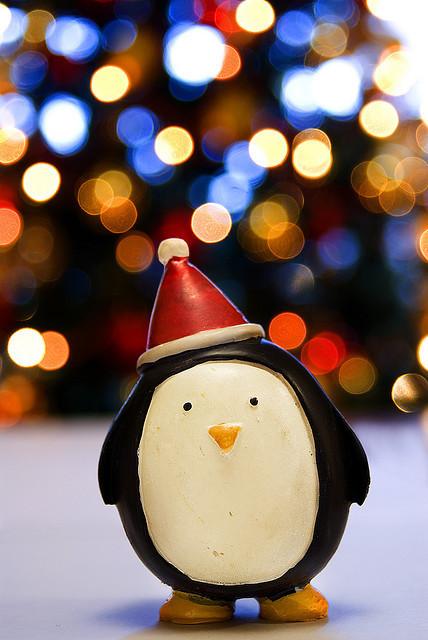 animal-christmas-hat-holidays-lights-Favim.com-272595
