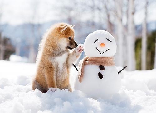 christmas-pet-Favim.com-1556216